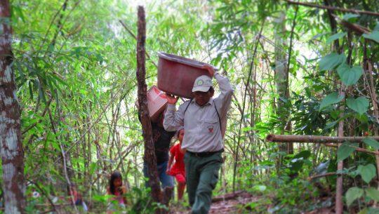 Nachhaltige Forstwirtschaft © First Climate