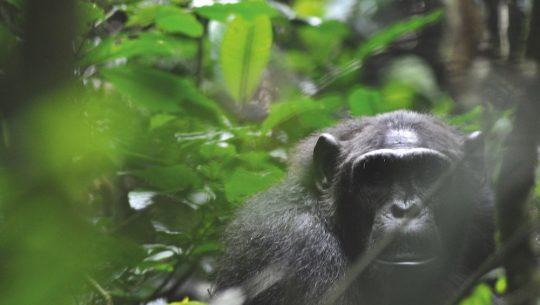 Uganda: Renaturierung des tropischen Regenwalds